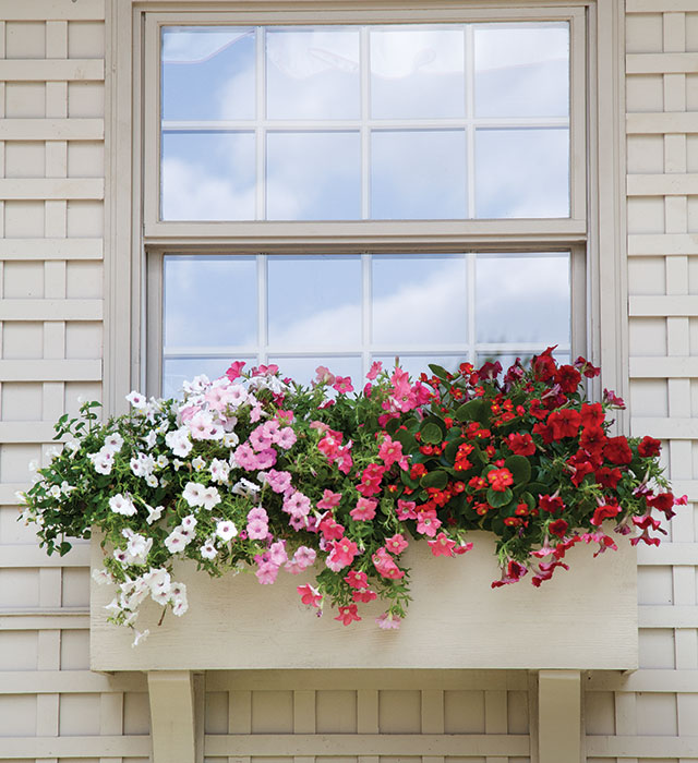 Ombre Window Box