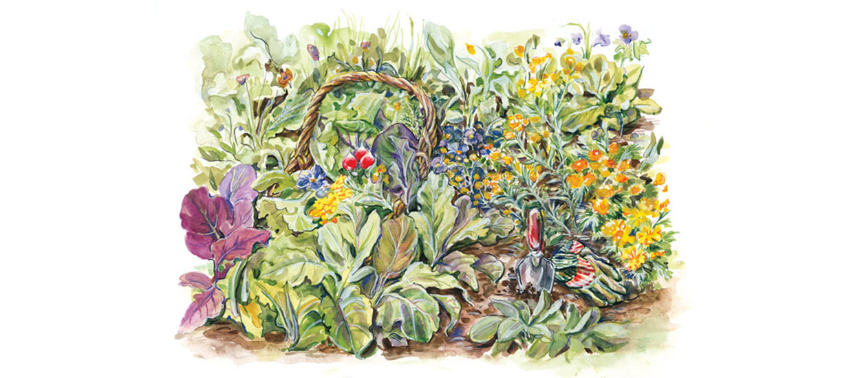 Watercolor illustration of a garden