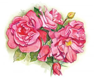 Watercolor painting of roses