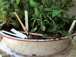 herb-garden-featured