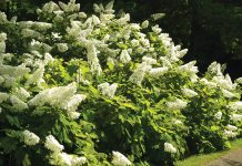 Southern Garden Trail: Aldridge Gardens